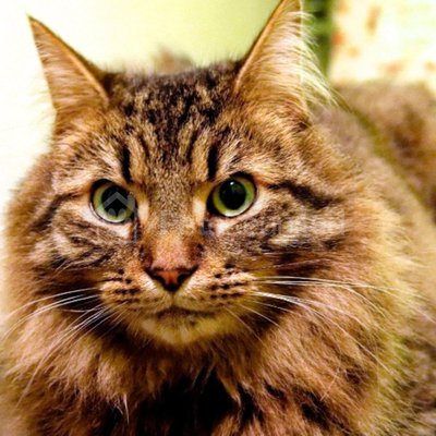 Lost cat: Tabby cat called Winston - Bury St Edmunds area