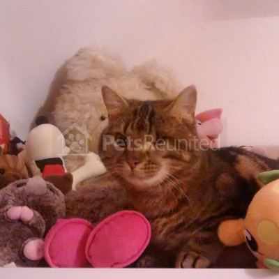 Lost cat: Black cat called Jet - Maidstone area, Kent | petsreunited com