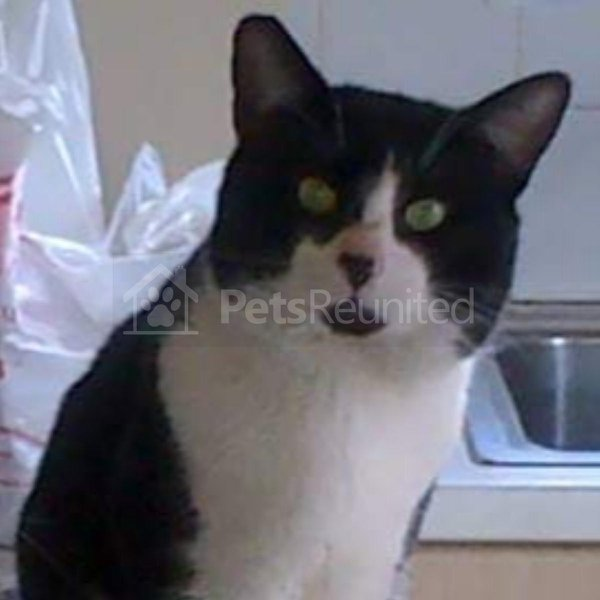 Whitecat Names: 210 Food Cat Names Bobbydaleearnhardt